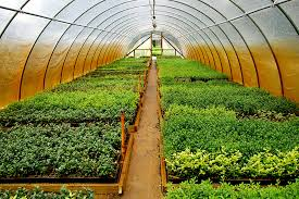 Ontario hothouse growers produce most of Canada's hothouse foods in a sustainable environment